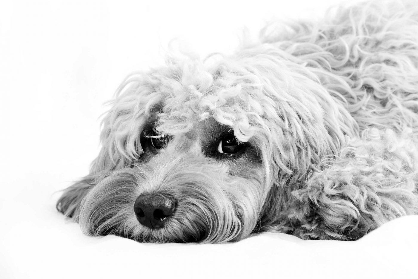 pet-photography-woking